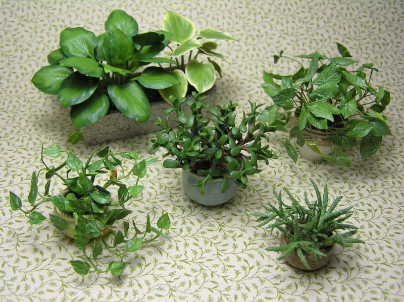 Mini Corn Plant : Dollhouse miniature plants by carolyn mohler kraft